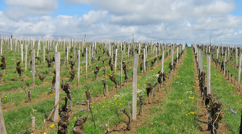 St Emilion vineyards