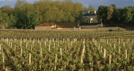 Vineyards at Chateau Margaux_1_0_0